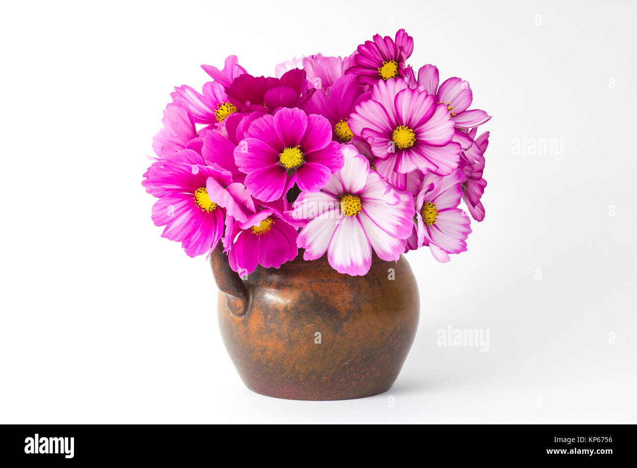 Cosmos Flowers In A Vase On White Background Stock Photo 168553090