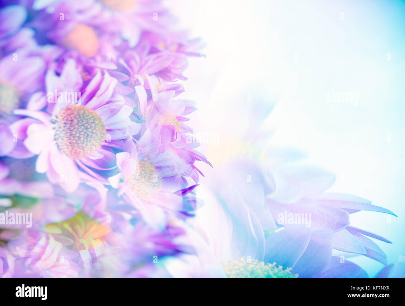Border Of A Beautiful Pink Blue Daisy Flowers Gentle Flower Bouquet Fine Art Background Selective Focus Tender Greeting Card For Wedding Day