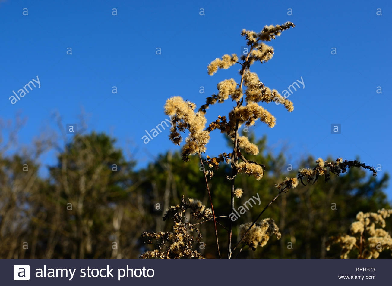 Farbenreich stock photos farbenreich stock images alamy for Strauch mit blauen bluten