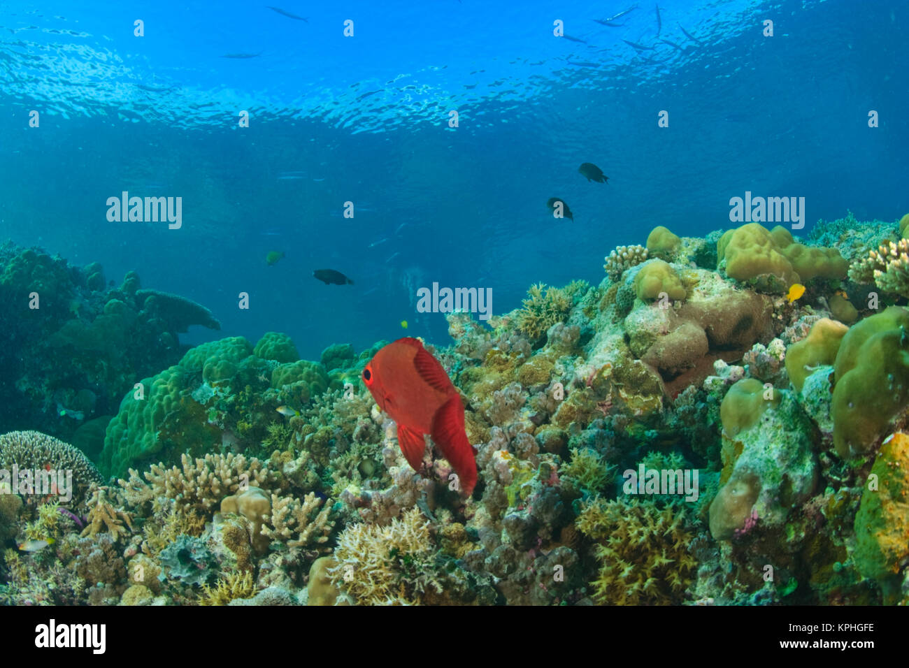 Essay on Coral Reefs