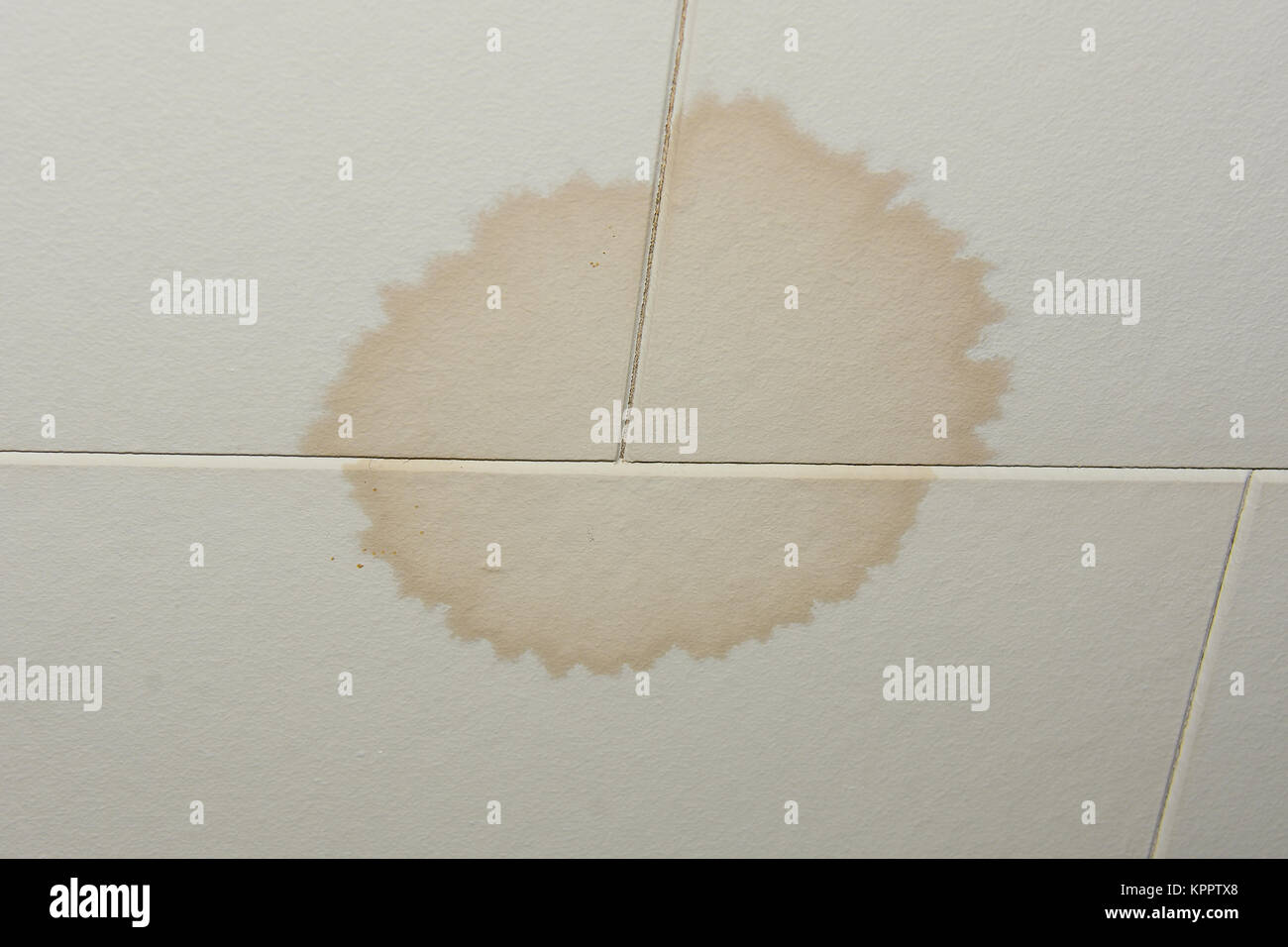 Leak ceiling stock photos leak ceiling stock images alamy water stained ceiling tile from a leaking roof stock image doublecrazyfo Choice Image