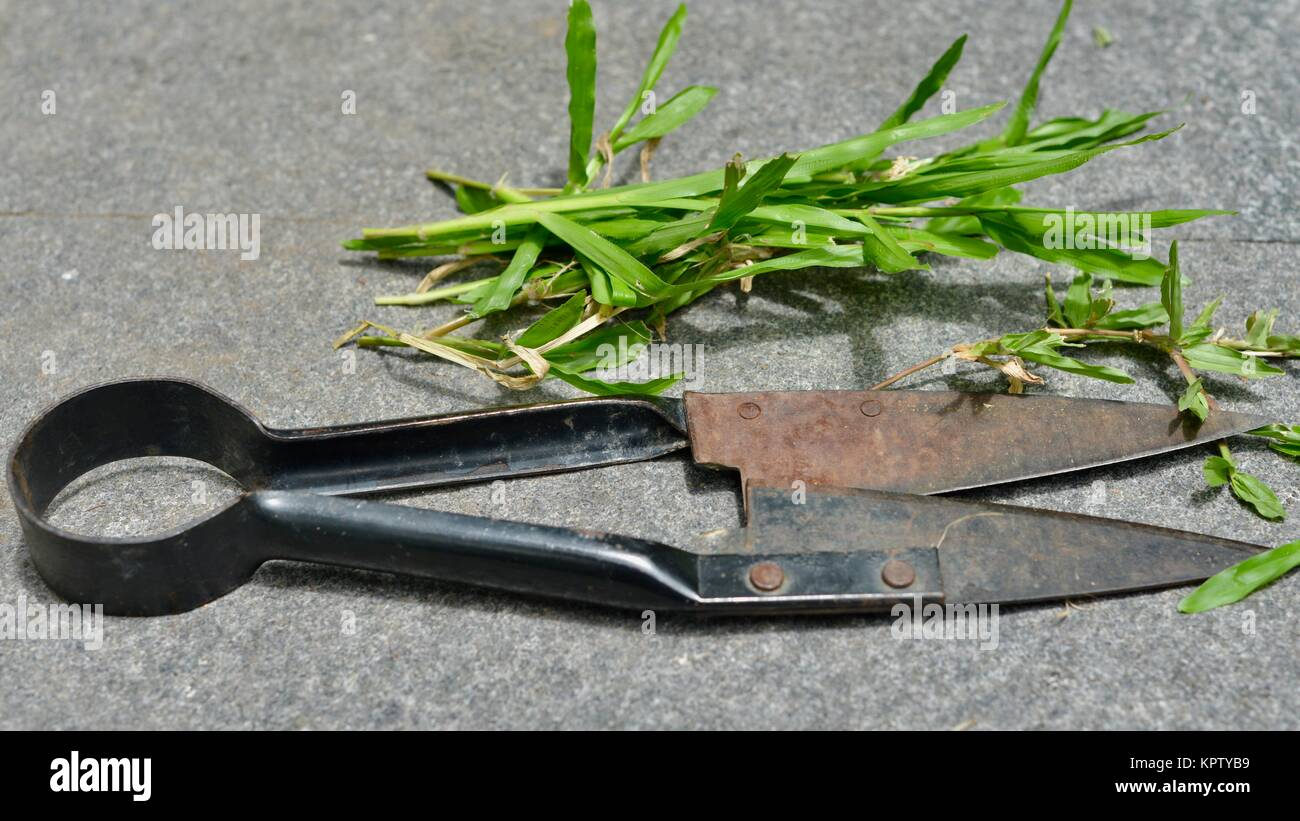 Grass cutters stock photos grass cutters stock images for Gardening tools brisbane