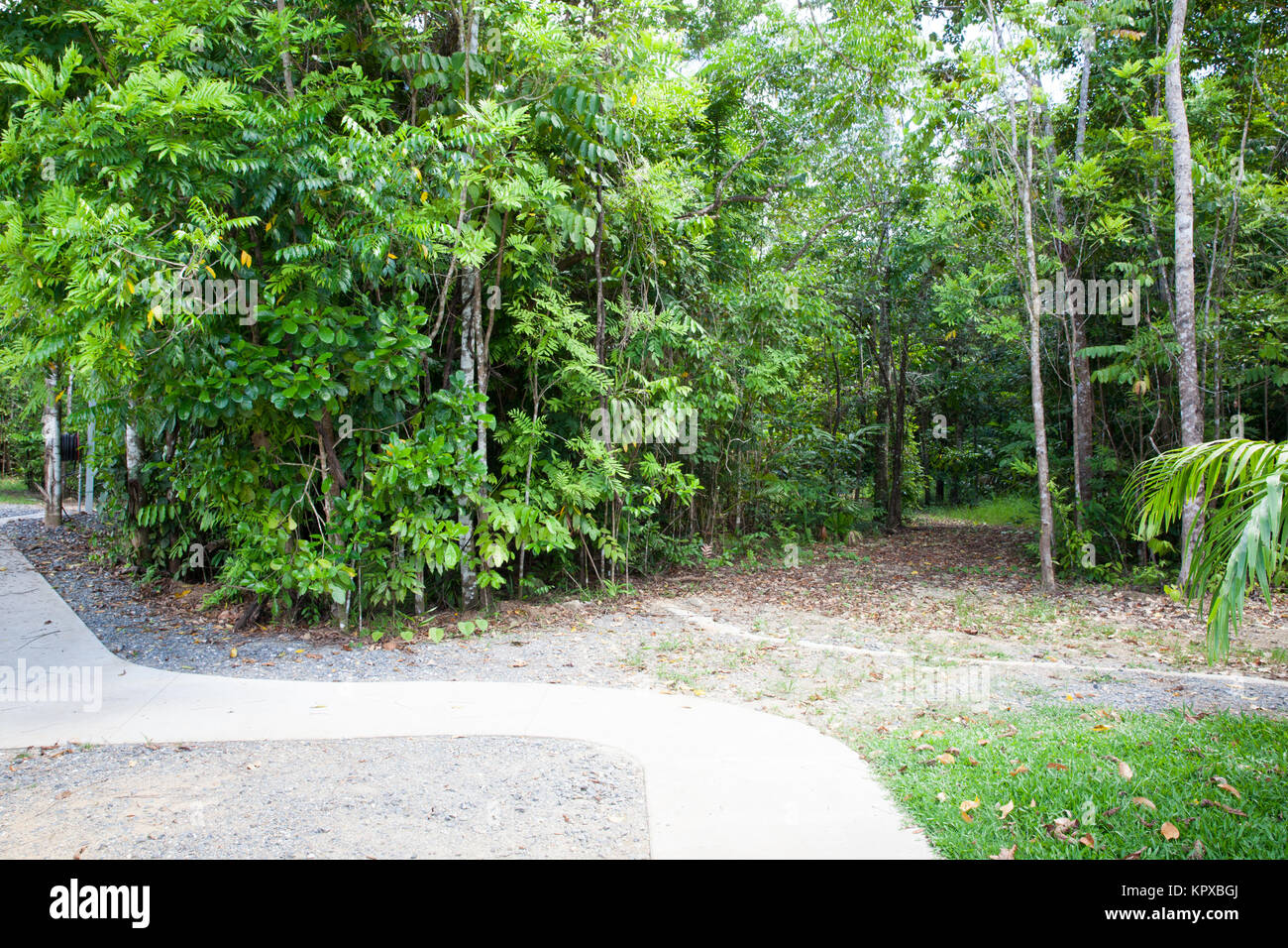 Nature tourist rainforest stock photos nature tourist for Diwan queensland