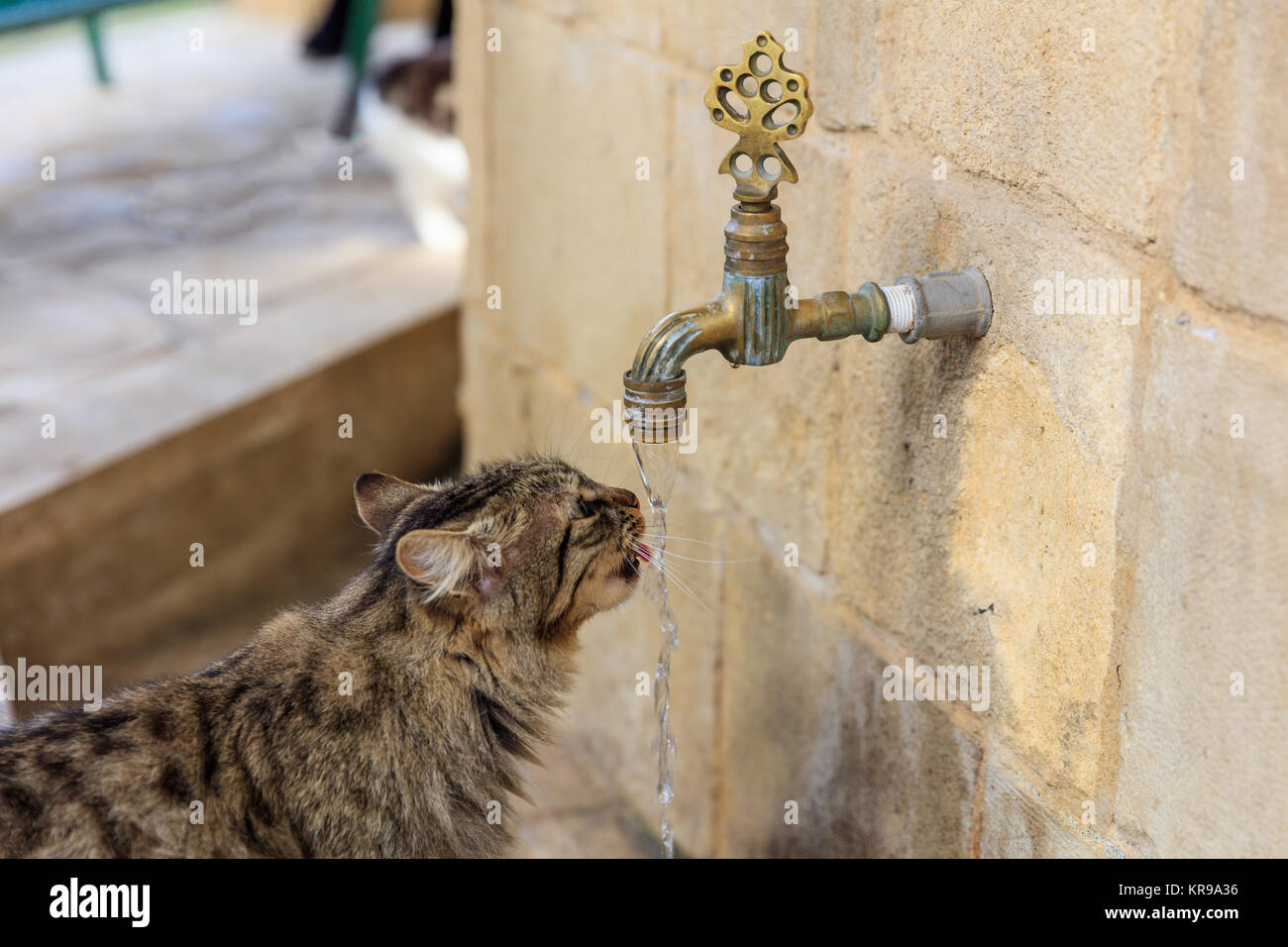 Cat Drinking Tap Stock Photos & Cat Drinking Tap Stock Images - Alamy