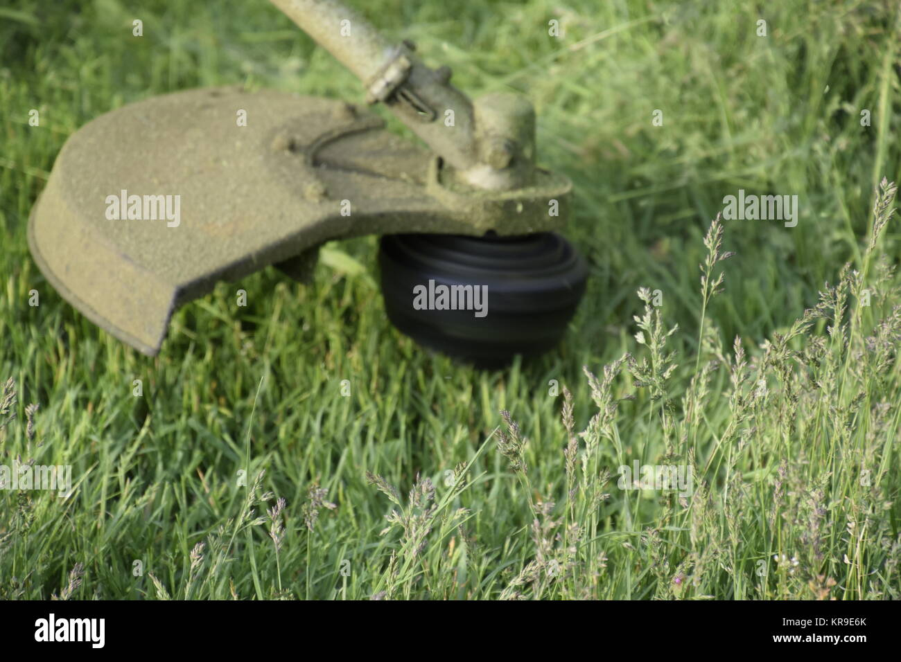 Grass trimmer line stock photos grass trimmer line stock for K9 fishing line