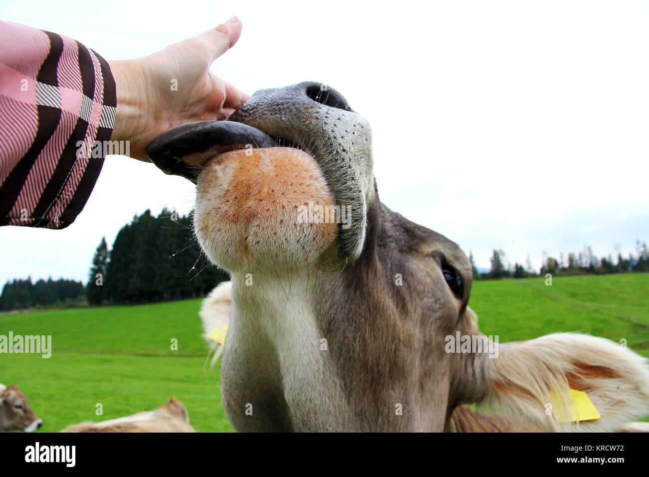 Tongue Kiss Stock Photos Amp Tongue Kiss Stock Images Alamy