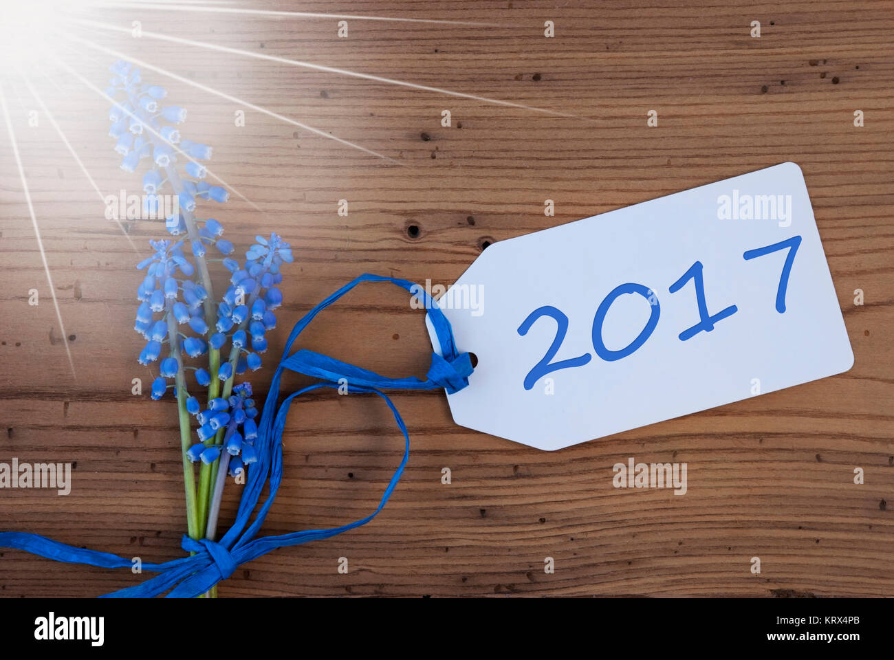 label with english text 2017 for happy new year greetings sunny blue spring grape hyacinth with ribbon aged rustic wodden background