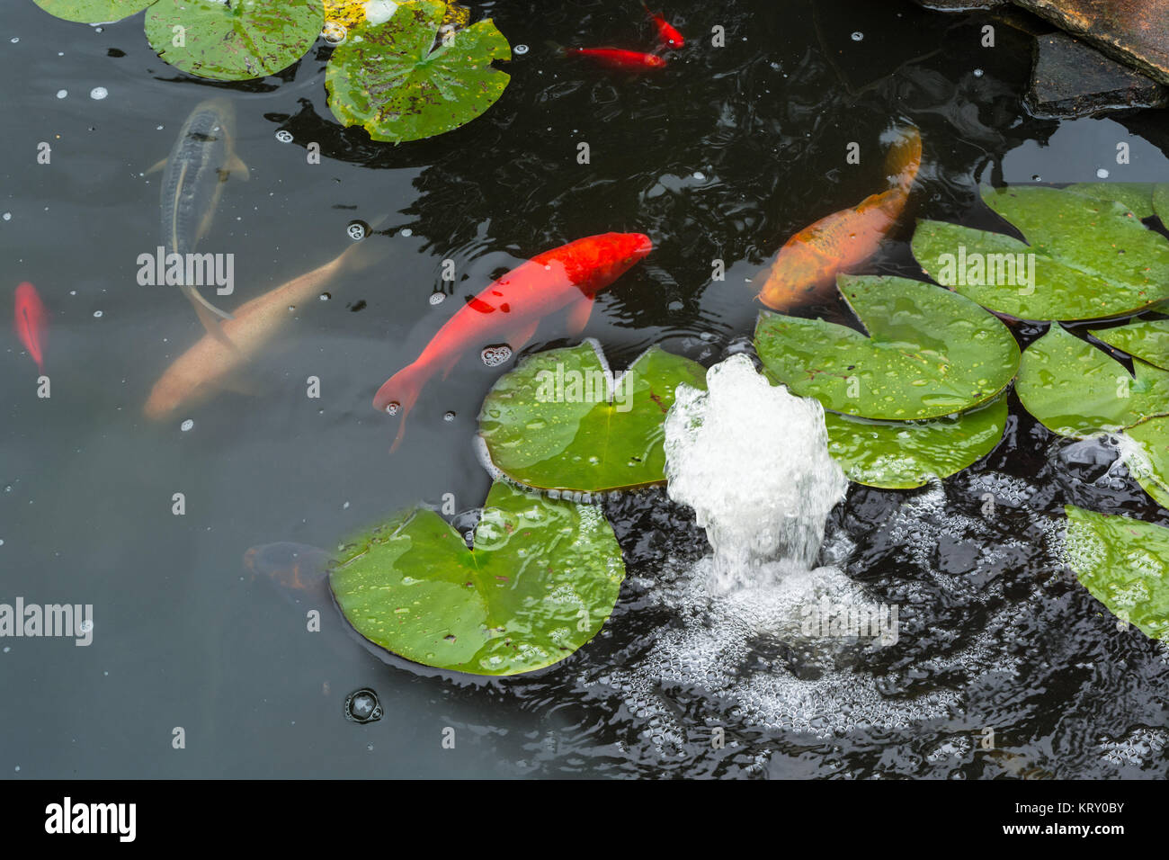 Wassergarten stock photos wassergarten stock images alamy for Koi swimming