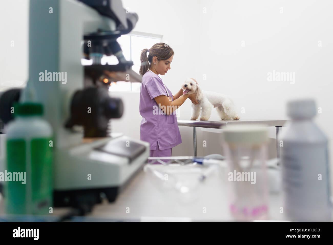 Pets At Home Martlesham Dog Grooming