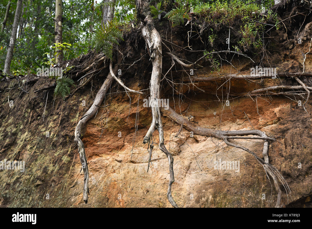 Hanging root root tree roots tree stock photos hanging for Soil erosion in hindi