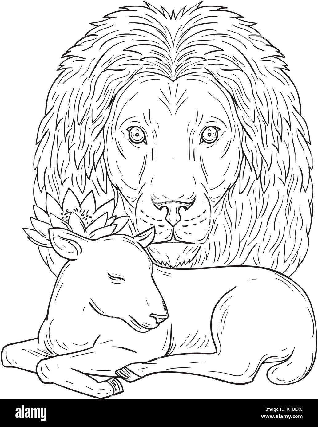 Lion Watching Over Sleeping Lamb Drawing Stock Photo 169898244 Alamy