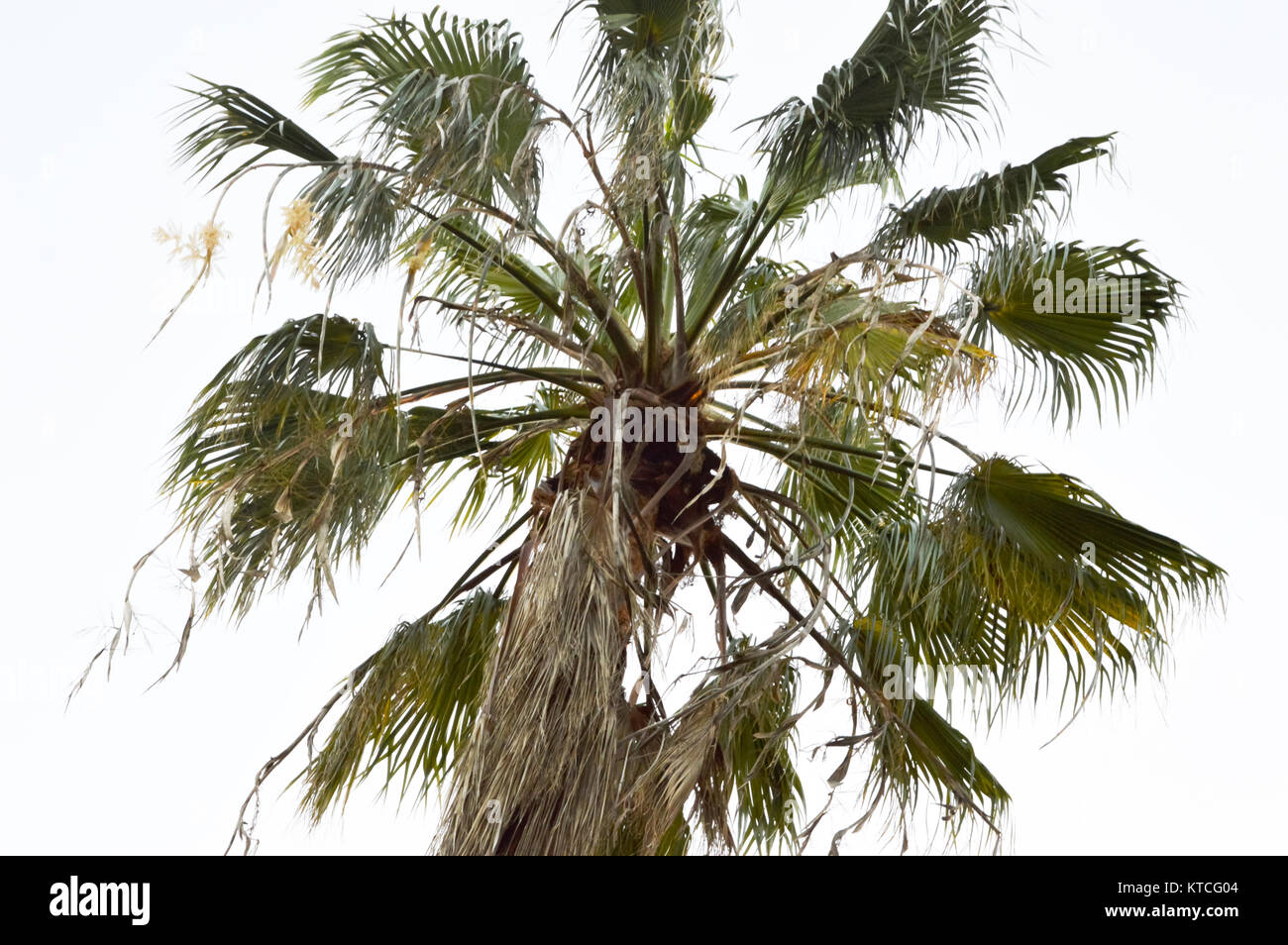 Waving Palm Branches Stock Photos & Waving Palm Branches ...