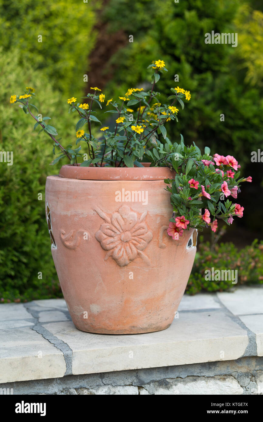 Yellow And Pink Flowers In The Ceramic Flowerpot Stock Photo
