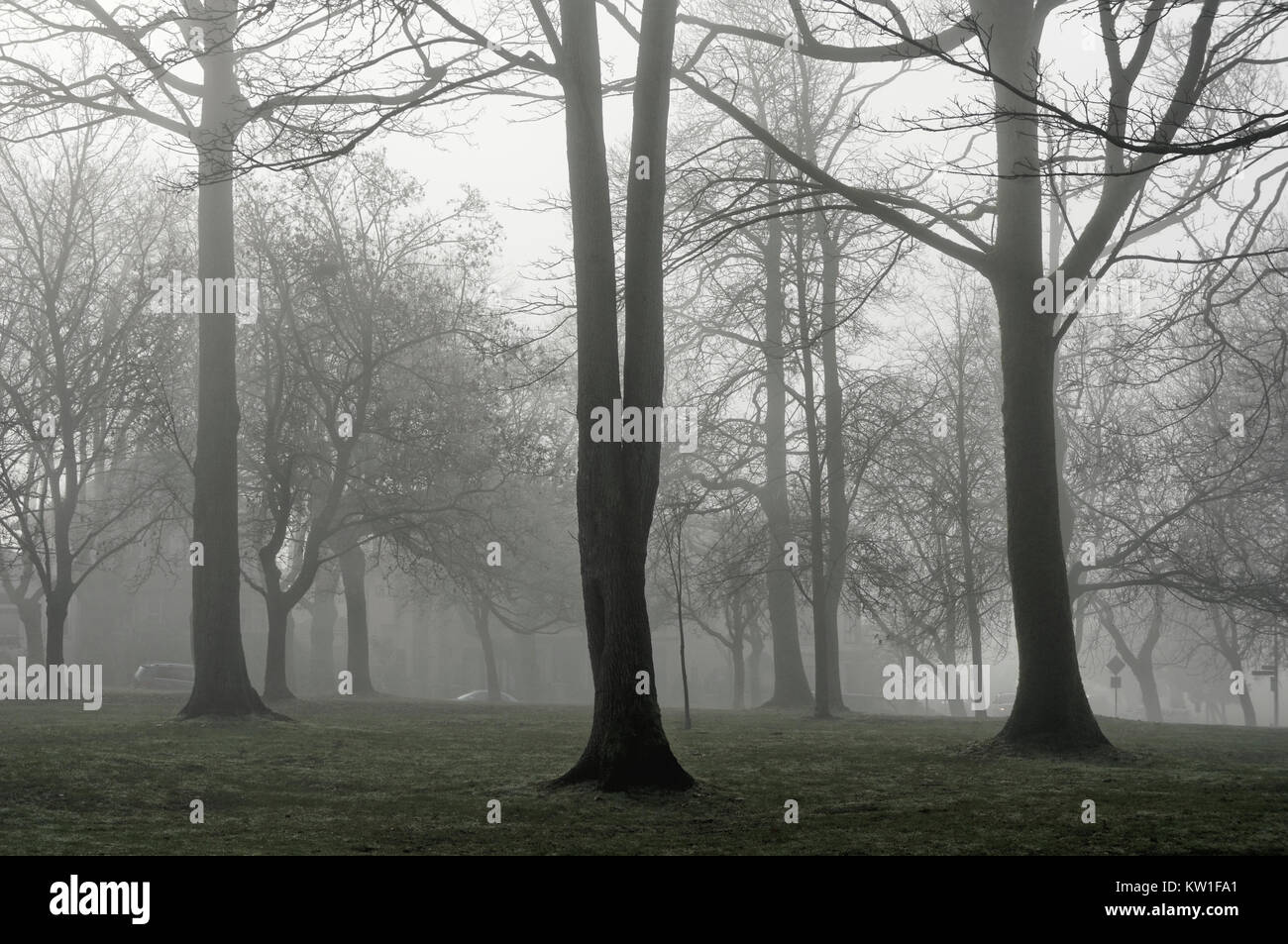 bare-deciduous-trees-on-a-foggy-day-hadd