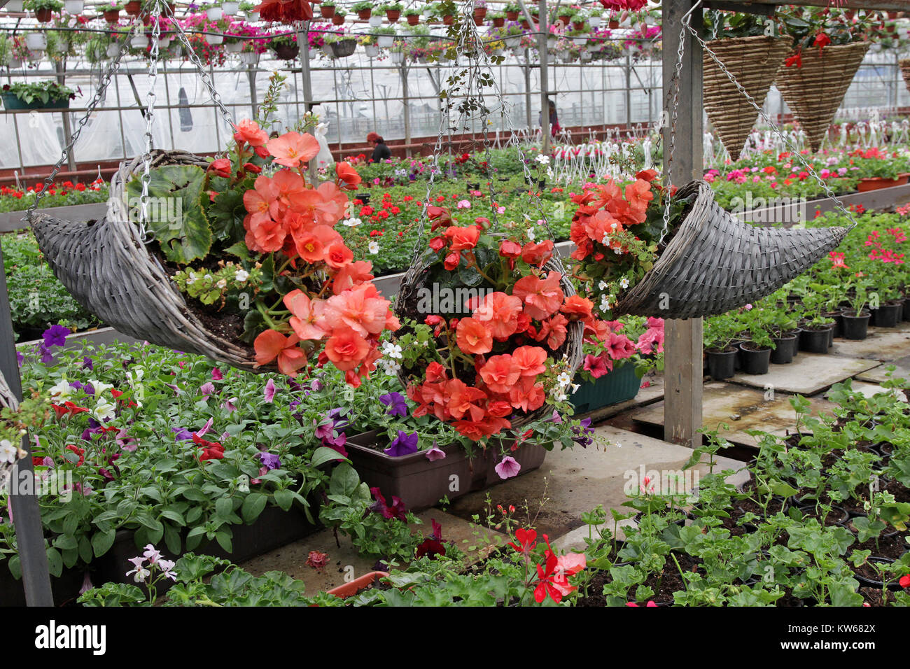 Unique wooden hanging flower pots with spring or summer flowers begonias for decoration or gifts with background of flowers field floral pattern