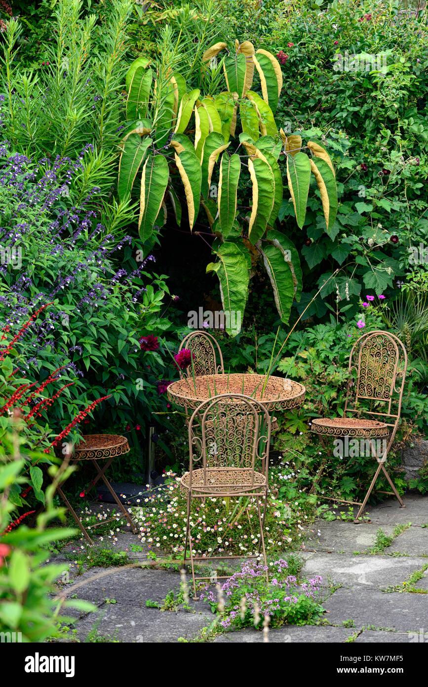 schefflera macrophyllasalviadahlia admiral rawlingspatioworughtmetal furniture - Garden Furniture Dublin