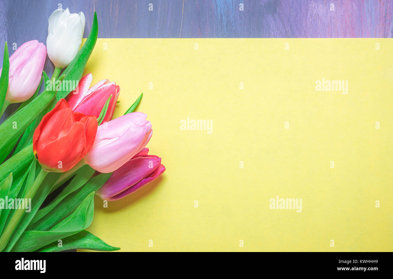 Greeting card idea with a bunch of multicolored tulips placed on a greeting card idea with a bunch of multicolored tulips placed on a blank yellow paper sheet with place for text displayed on a purple background m4hsunfo