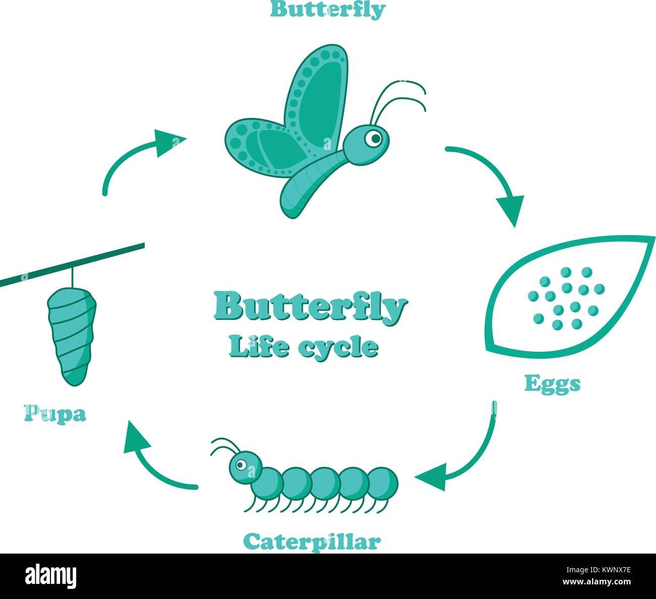 Life Cycle Diagram Stock Photos & Life Cycle Diagram Stock