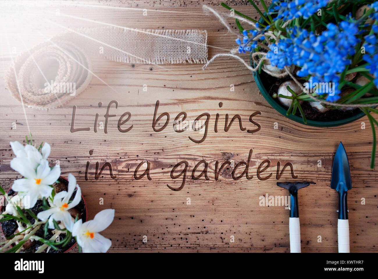 Image of: Swindoll English Quote Life Begins In Garden Sunny Spring Flowers Like Grape Hyacinth And Crocus Gardening Tools Like Rake And Shovel Hemp Fabric Ribbon Alamy English Quote Life Begins In Garden Sunny Spring Flowers Like