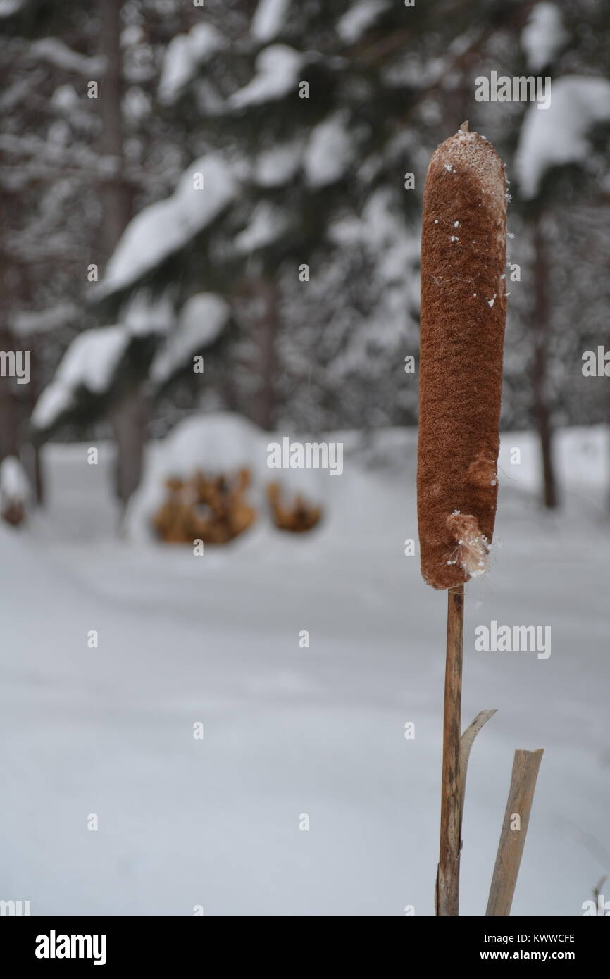 Invierno Stock Photos Invierno Stock Images Alamy # Muebles Duk Oiartzun
