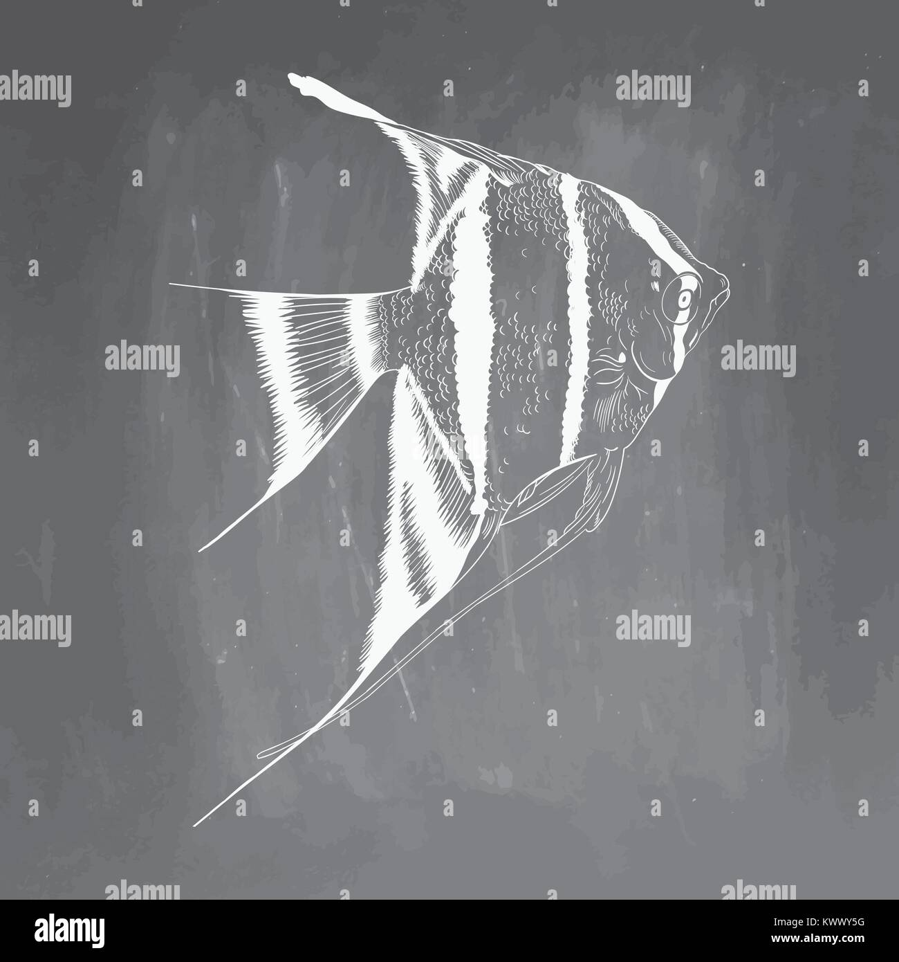 Hand Drawn Aquarium Fish Sketch Elements Isolated On Chalkboard