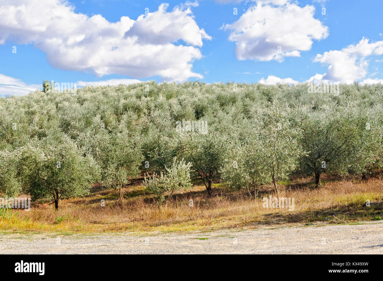 The Silver Grove Stock Photos The Silver Grove Stock Images Alamy