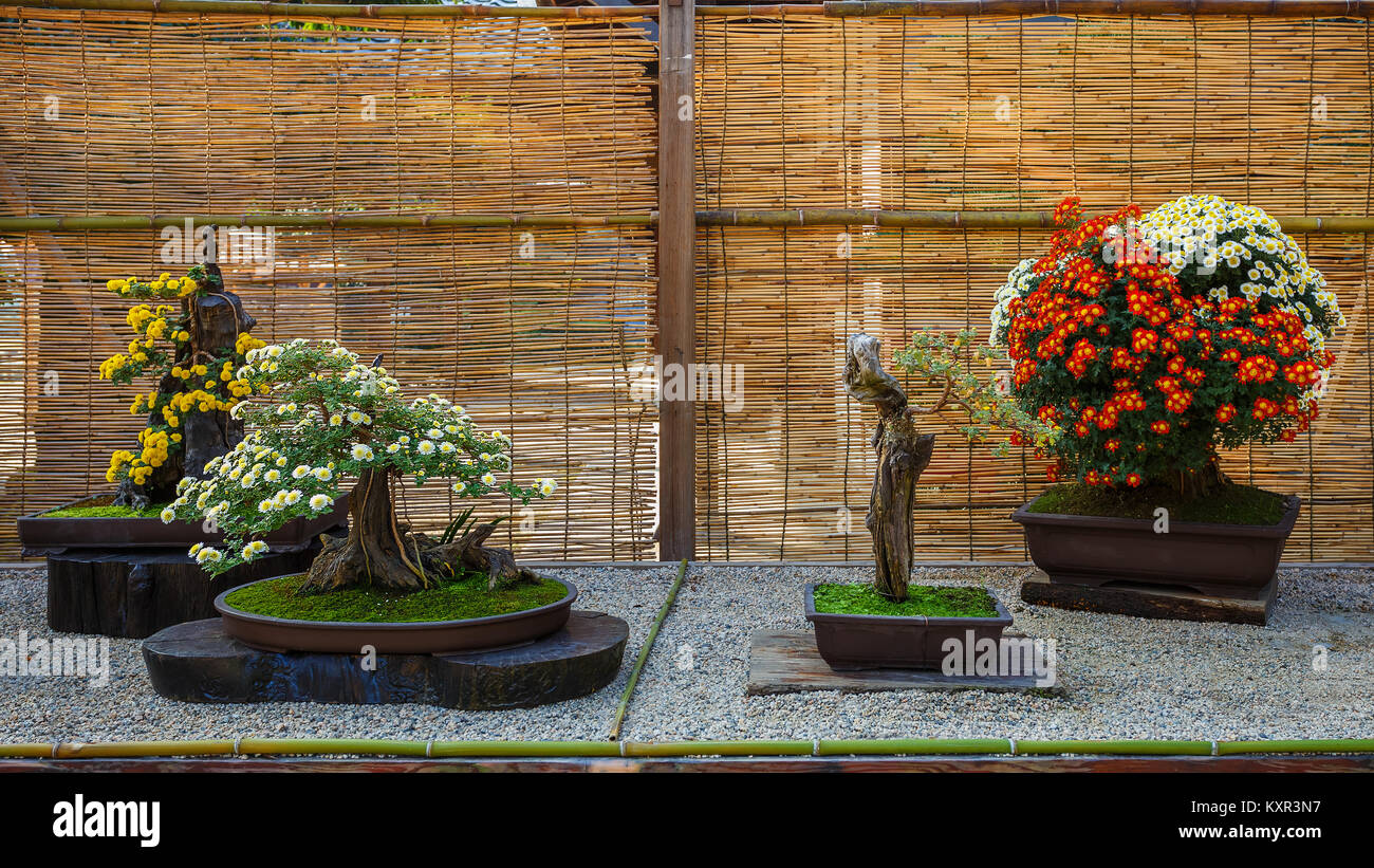 Japanese Small Bonsai Tree In A Garden Stock Photo 171382211 Alamy Wiring Schefflera