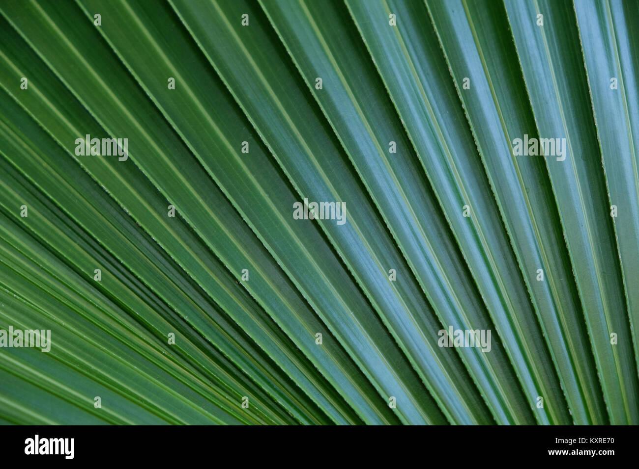 Color Stripe Tropical Palm Trees Stock Photos & Color Stripe ...