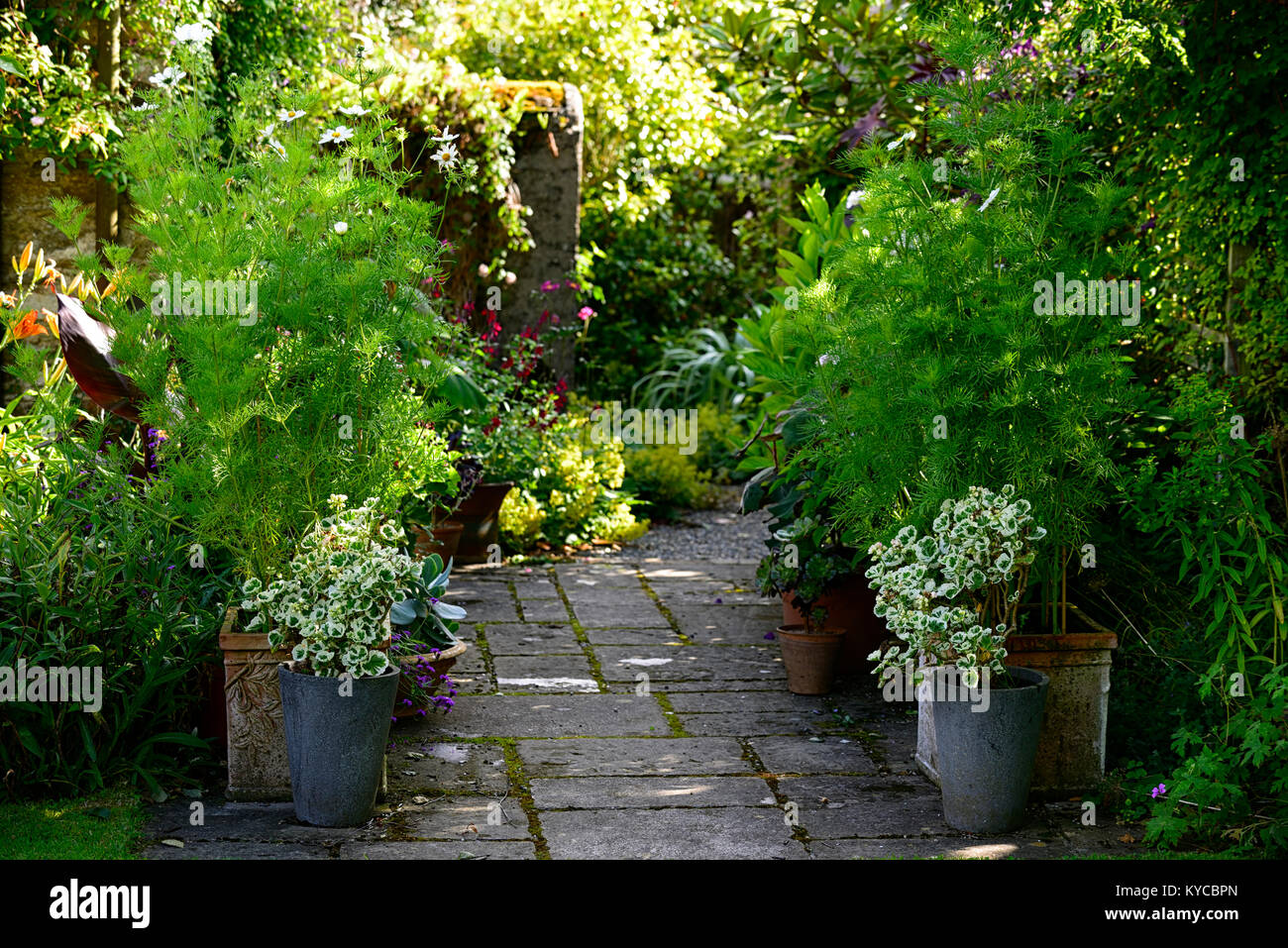 Patio,entrance,pots,containers,cosmos,variegated  Pelargonium,secluded,lush,summer,garden,gardening,The Bay Garden,Camolin,RM  Floral