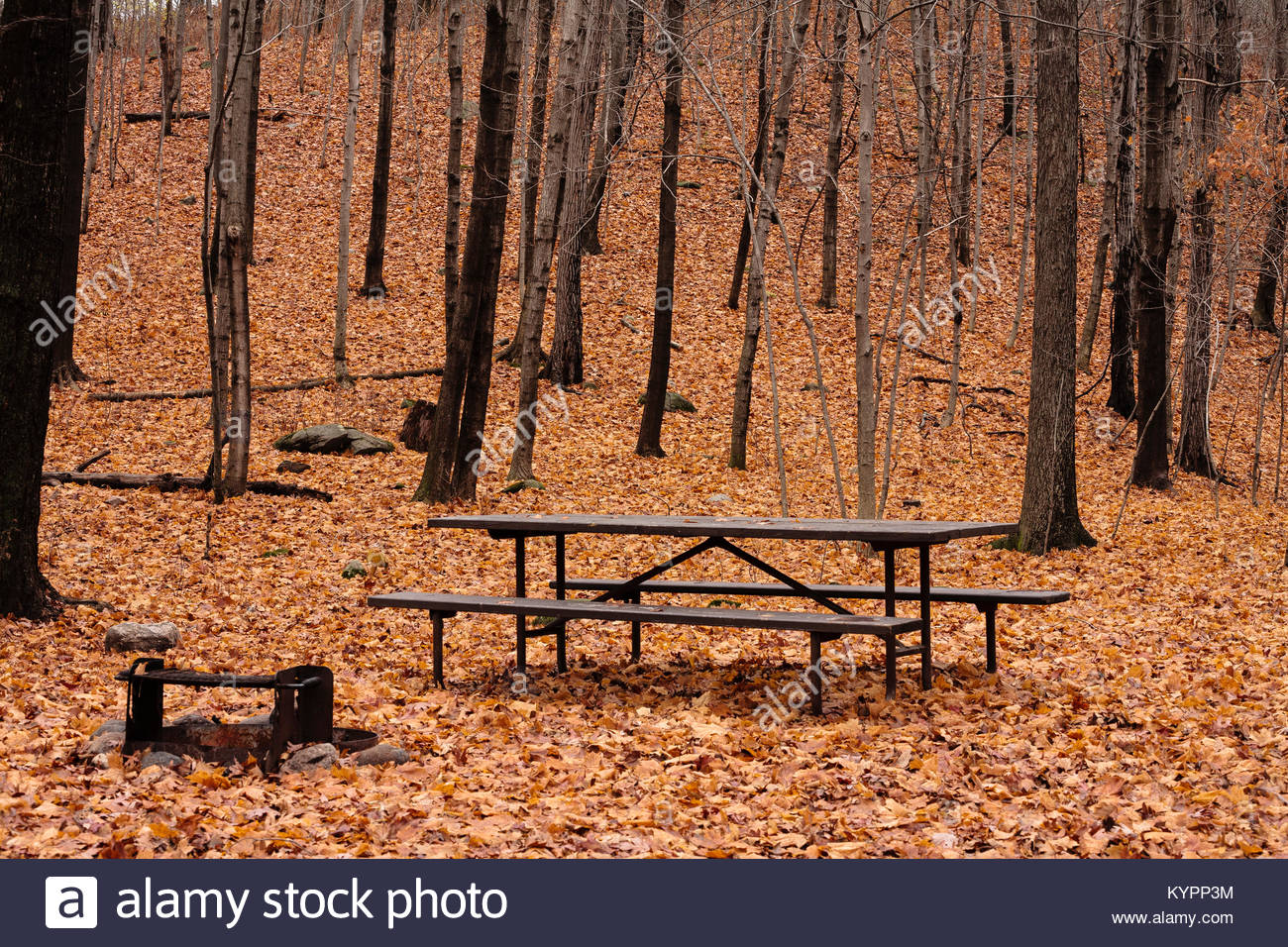Campground Picnic Table And Fire Pit In Late Autumn Within The Pike - Fire picnic table