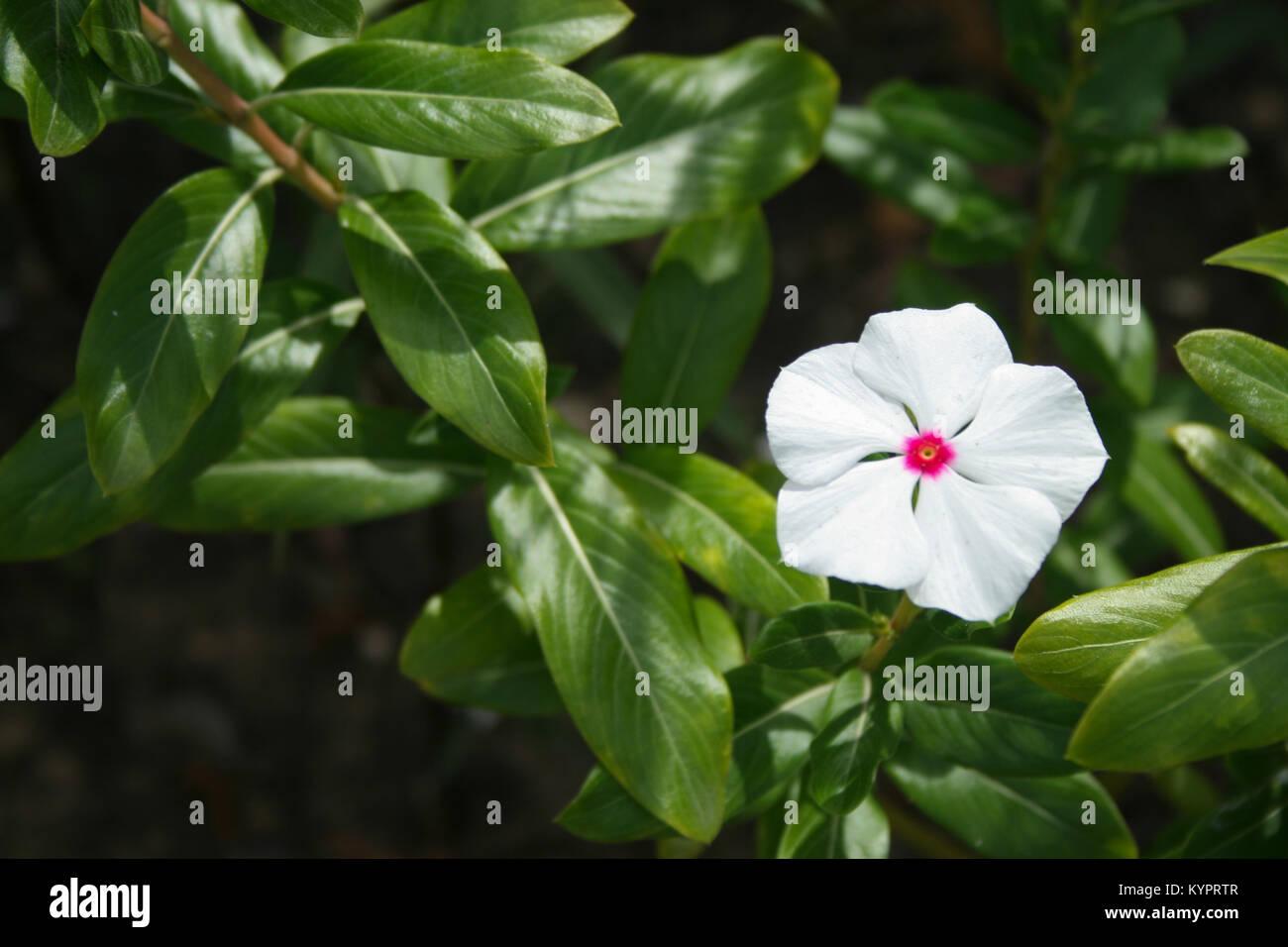 Tropical Island Flowers: Caribbean Flowers Landscape Stock Photos & Caribbean