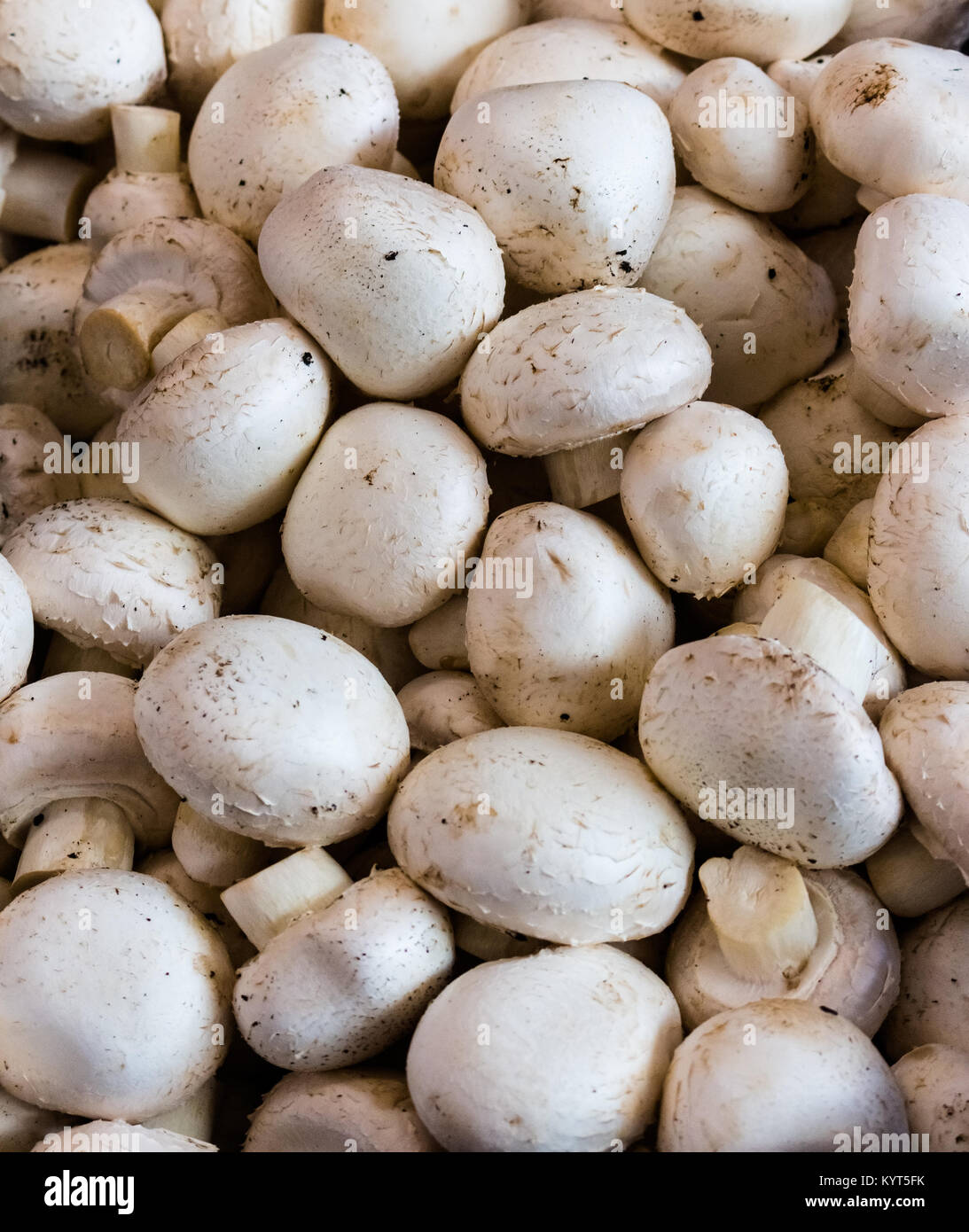 Forest delicacy - white mushrooms. How to clean 29