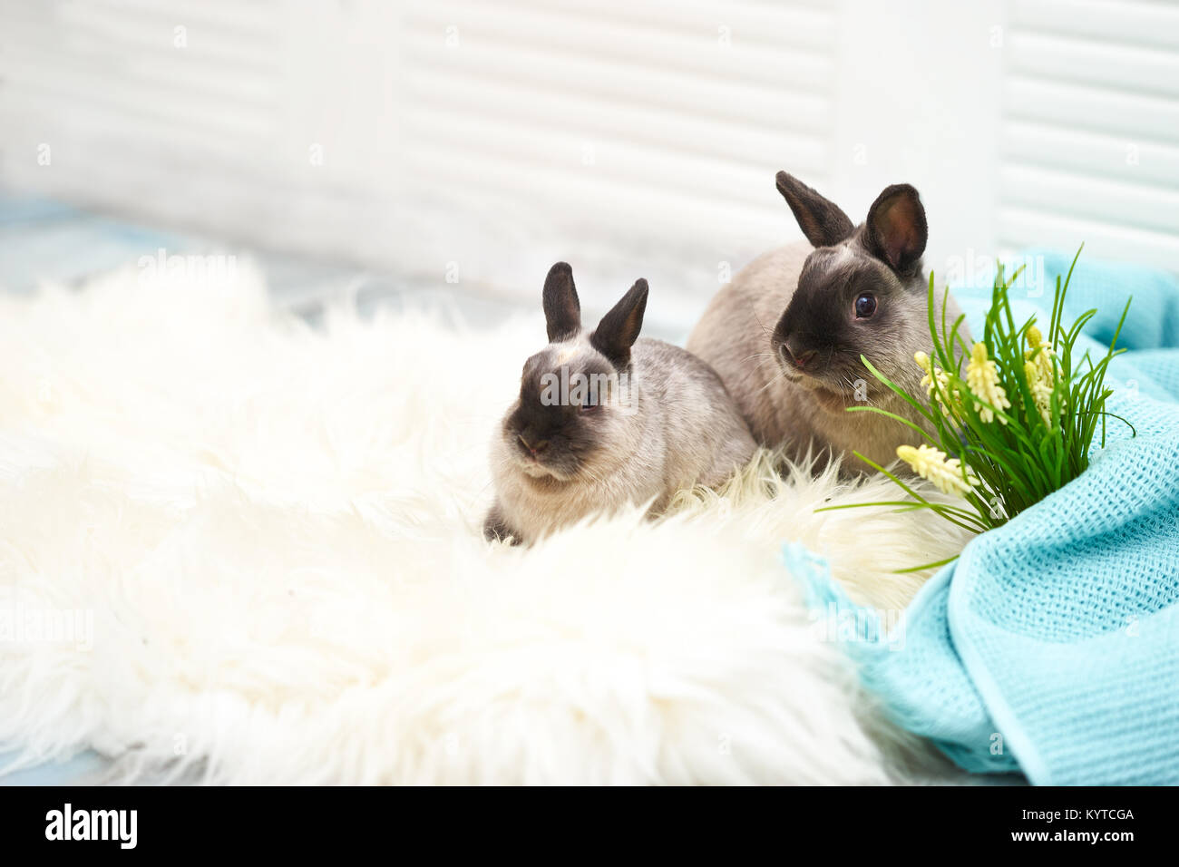 Close Up Studio Shot Of Two Cute Bunnies In Light Room With Easter