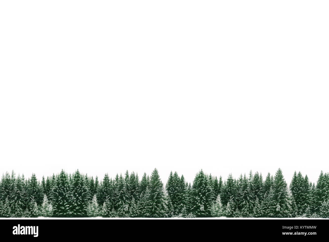 border frame of spruce tree forest covered by fresh snow during winter christmas time and new year with large empty white blank space for text