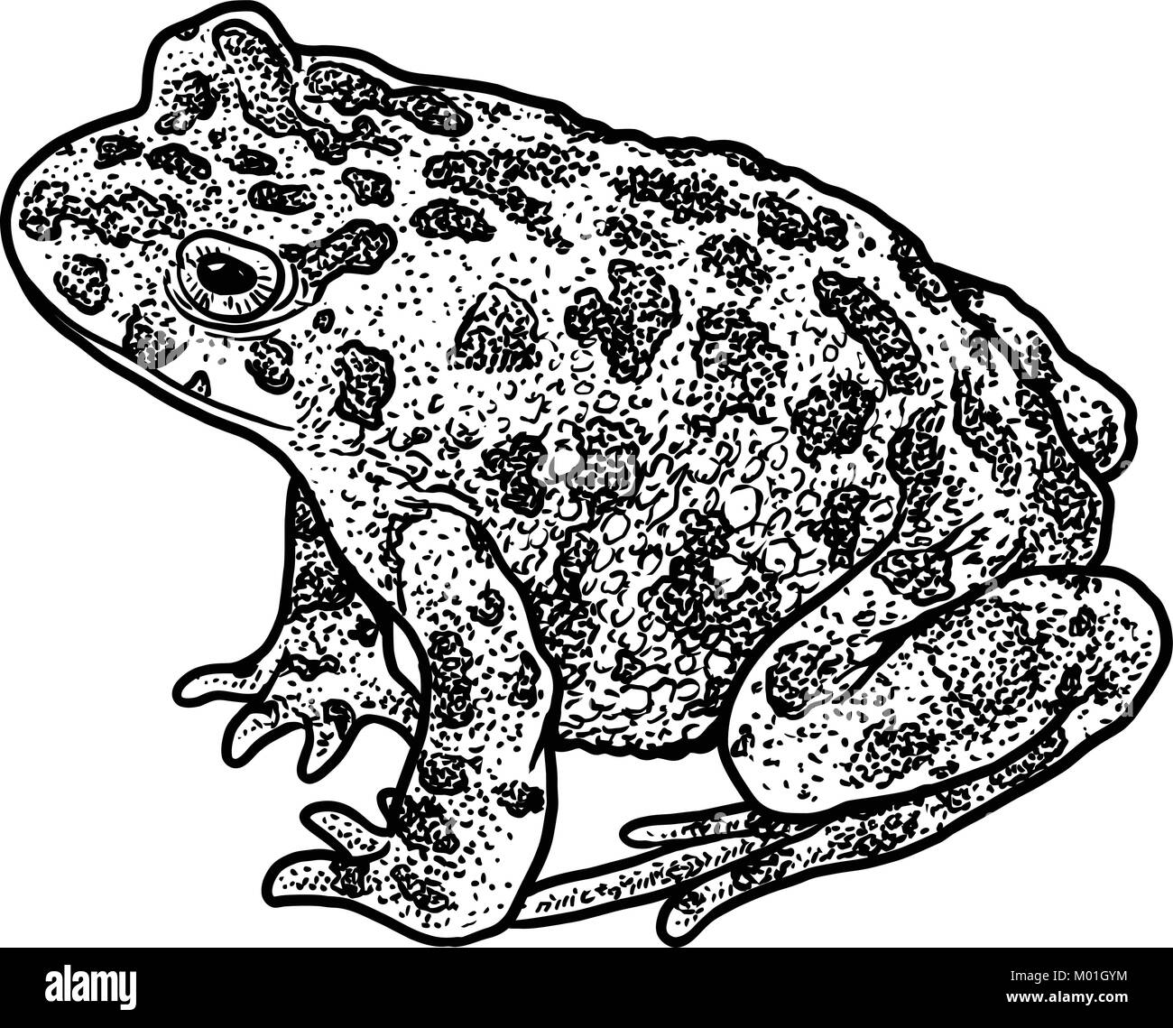 Drawing Red Lines With Green Ink : Amphibian black and white stock photos images alamy