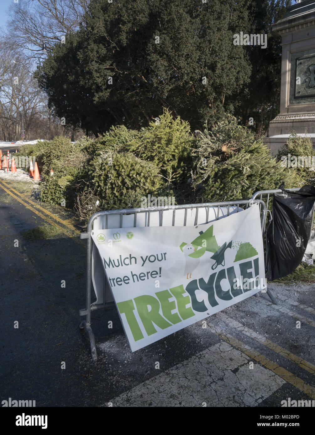 Christmas tree drop off point for mulching in Prospect Park Stock ...