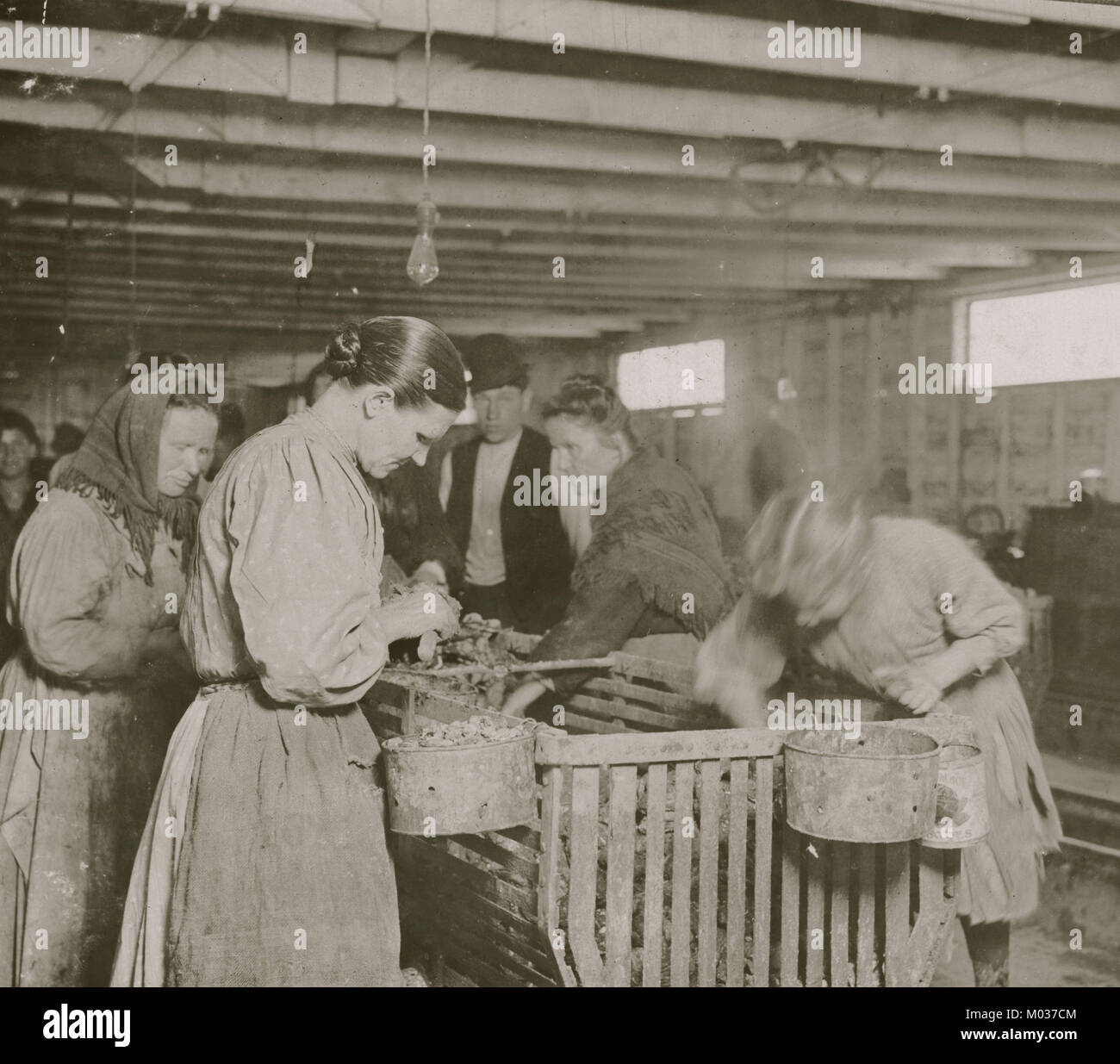 Eight Year Old Lizzie Earns 30 Cents A Day Shucking Oysters In The Dunbar Cannery