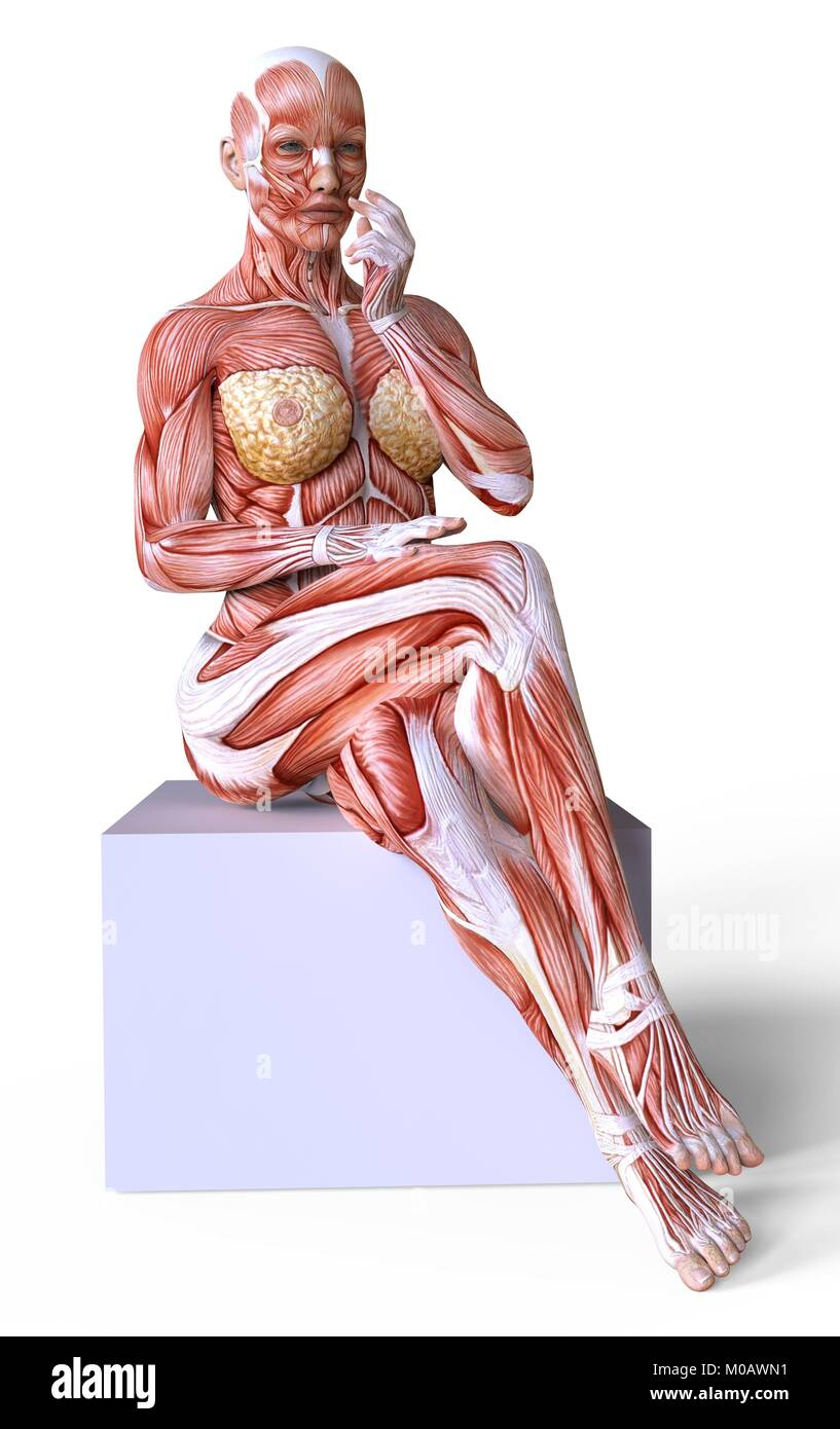 Female Body Without Skin Anatomy And Muscles Isolated On White