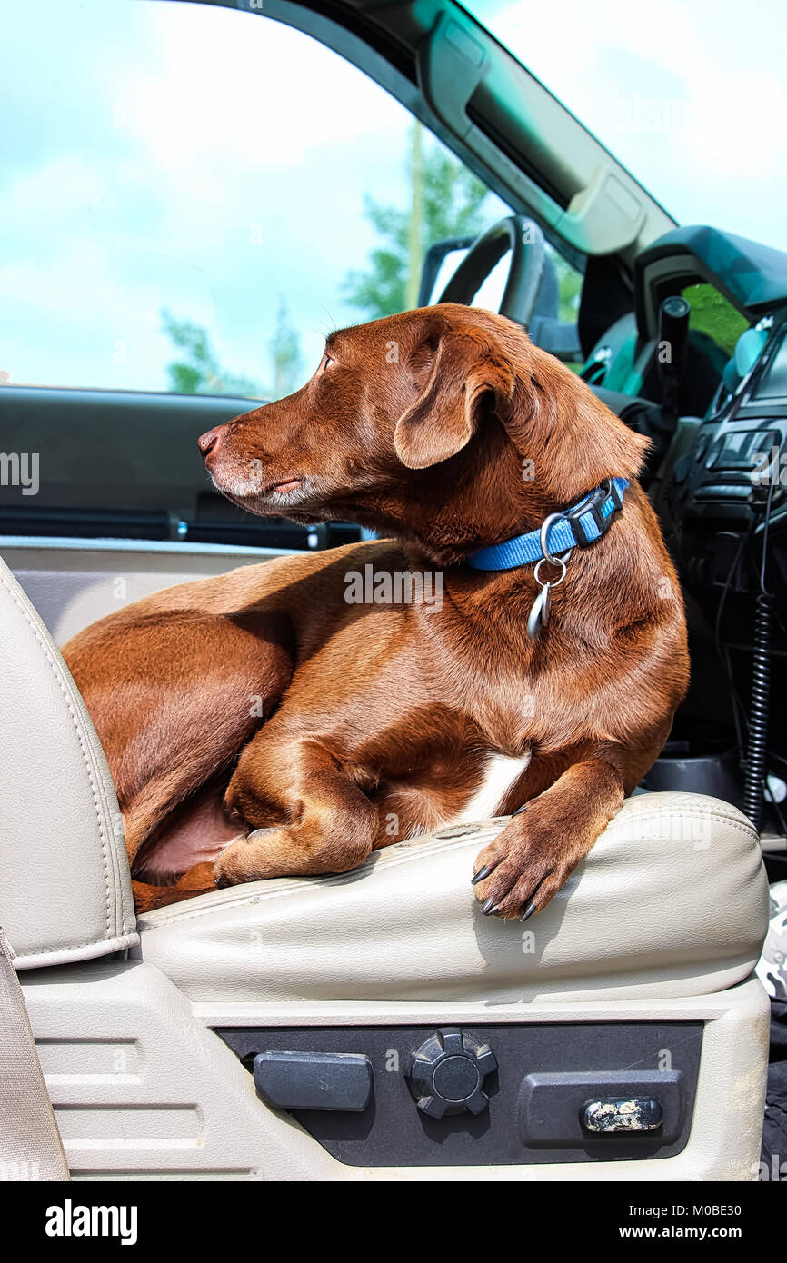 A Dog Sitting Comfortably In The Front Seat Of Truck