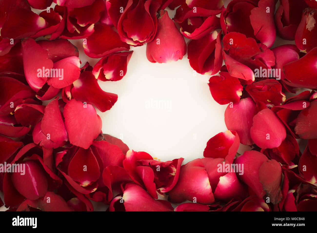 Greeting Card Red Rose Petals With Blank Message Sign For Your Text