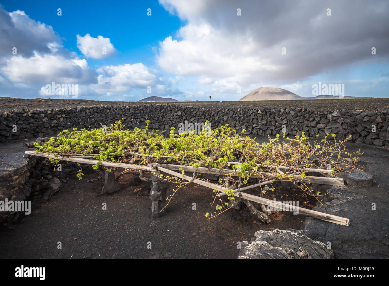 Wines From La Palma Canary Islands