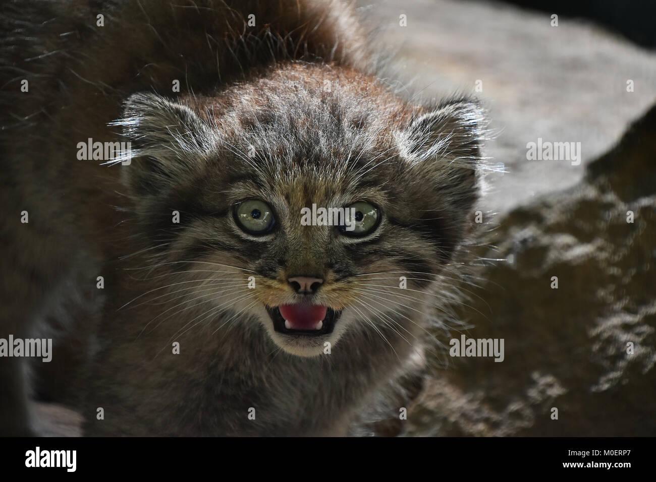 kittens week by week