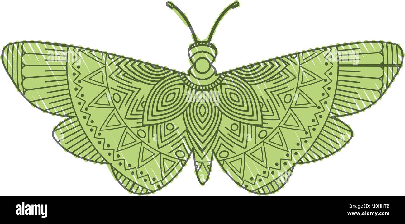 hand drawn for adult coloring pages with moth bug zentangle Stock ...
