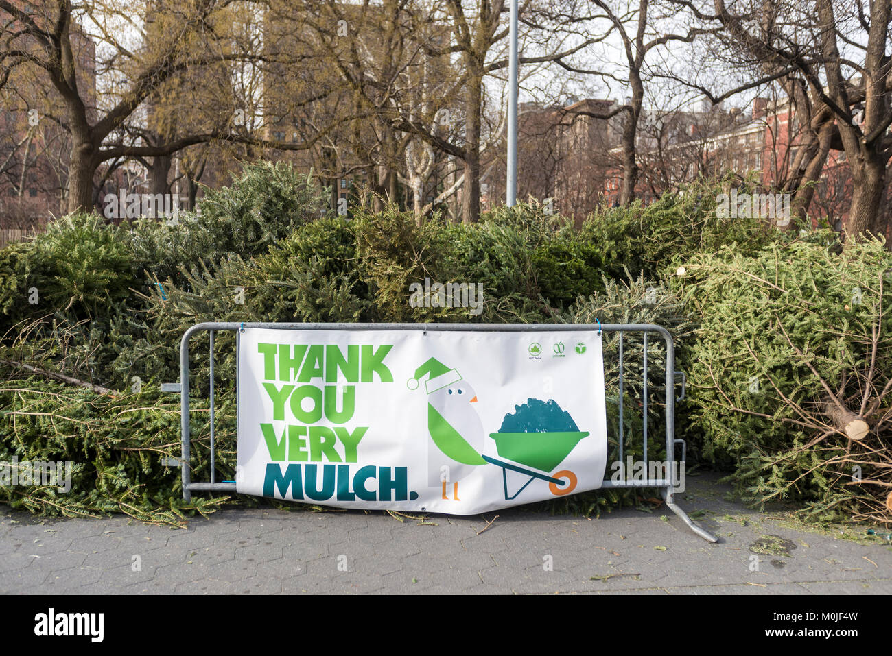 The NYC Parks Department sets up Christmas Tree recycling in Stock ...
