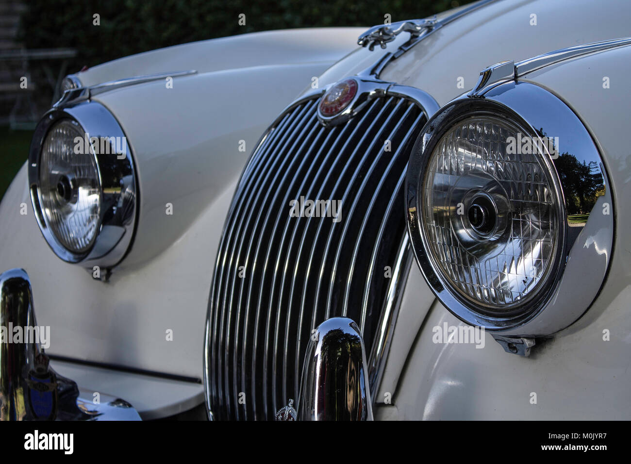 Vintage Jaguars 13