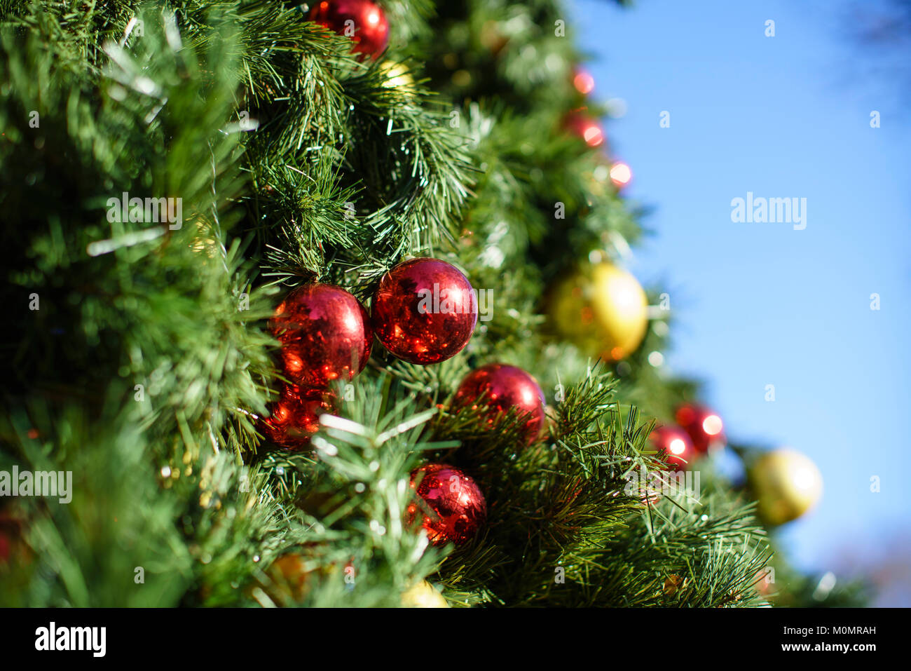Nice Gold And Red Baubles On A Large Christmas Tree Outside On A Sunny Day  Against A Blue Sky