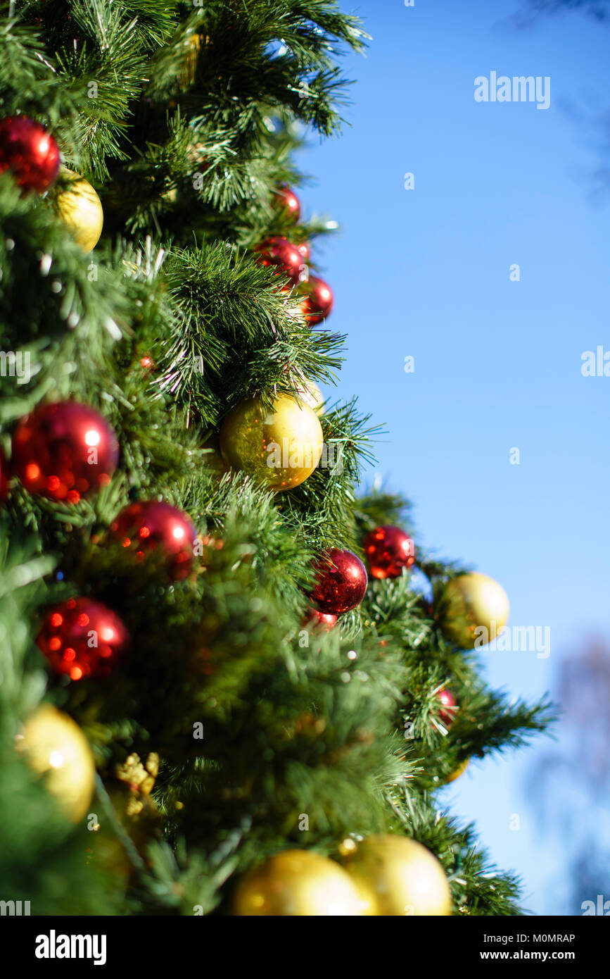 Perfect Gold And Red Baubles On A Large Christmas Tree Outside On A Sunny Day  Against A Blue Sky