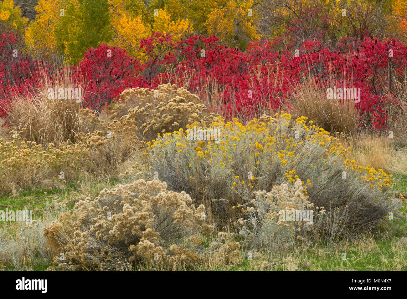 A wild garden of plants along a streambed in the Great Basin Desert ...