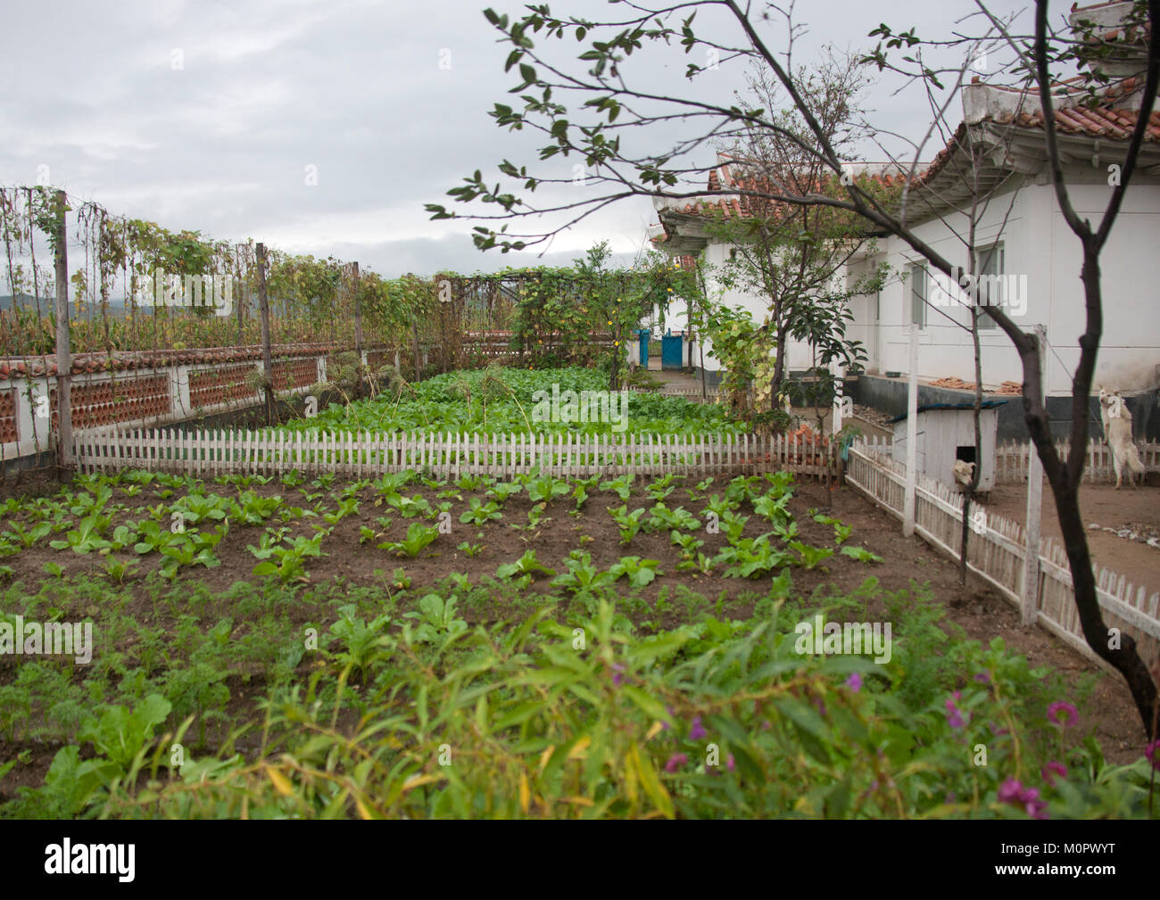 Private Garden In Front Of A North Korean House The Countryside South Hamgyong Province Hamhung Korea