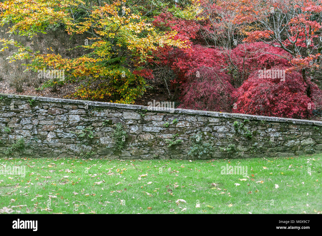 Autumn colored trees and plants, garden park view Stock Photo ...